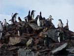Antarctica Penguin Party on the Rocks